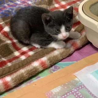 生後1ヶ月の子猫4匹の里親募集中
