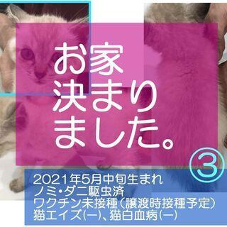 2021年5月生の子猫*3 【※全員決定】