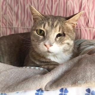元気いっぱいのグレー猫さんの画像