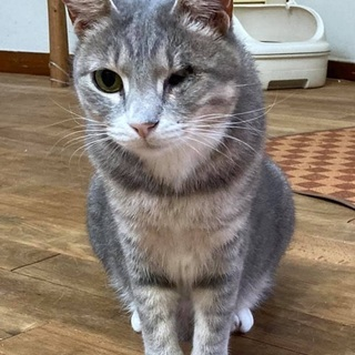 元気いっぱいのグレー猫さん − 神奈川県