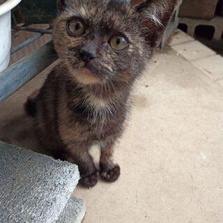 サビ子猫の画像