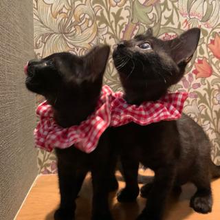 黒猫好きの方!とても甘えた兄と妹です♡