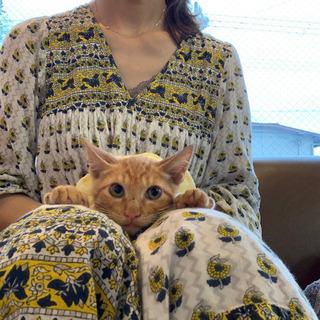 最初は馴れ馴れだったのに、最近家猫修行が進んでいません。
