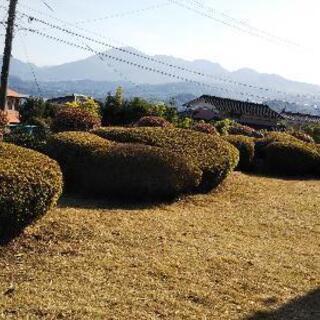 小回り便利屋さん 庭木剪定、草刈り強化月間