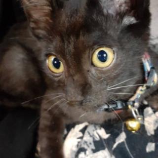 元気いっぱい黒猫くん決まりました!
