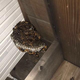 🐝蜂の巣駆除🐝お受けいたします