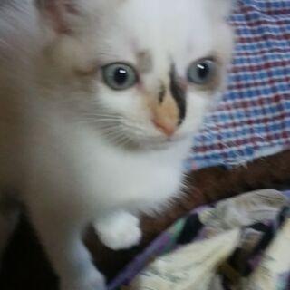 息栖神社に置き去りにされた仔猫2匹の里親さんを募集いたします。