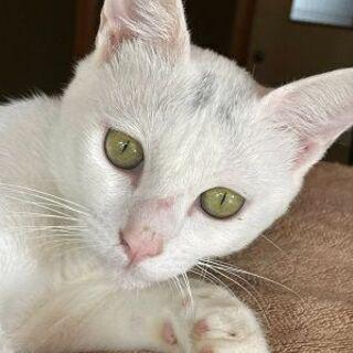 綺麗なゴールド色の目をした可愛い猫!
