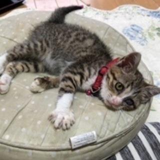 保護猫生後2ヶ月メス