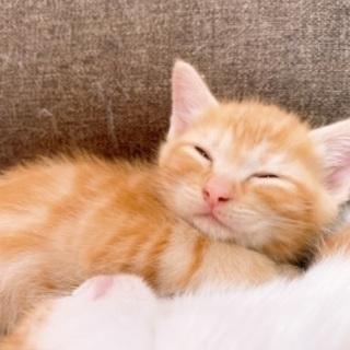5月生まれの生後約2か月の兄弟猫です