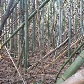 放置竹林でお困りではないですか??