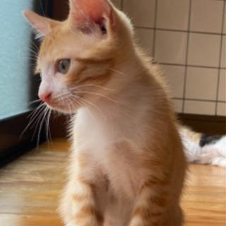 【受付一時ストップします】2ヶ月すぎの4匹の子ネコちゃんです(=...