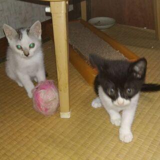 子猫 3.5か月
