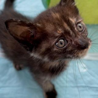 生まれて1ヶ月の子猫