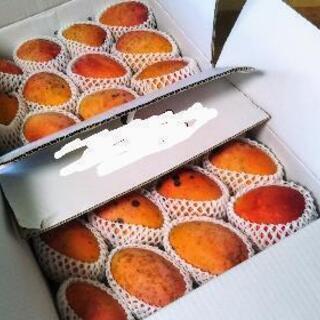 石垣島のマンゴーです