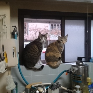 写真家の兄妹猫