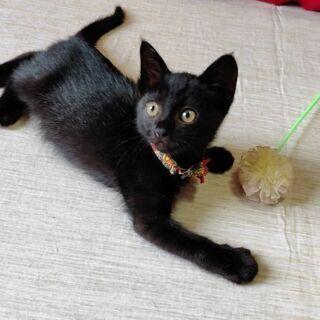 生後2ヶ月の黒猫♣トライアル中