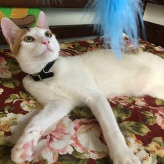 綺麗なオス猫11ヶ月