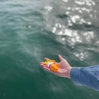 【海洋散骨】 瀬戸内海にて海洋散骨サービスを致します。広島県福山...
