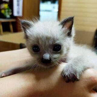 屋根裏に野良猫が赤ちゃんを産んでました。保護していますが誰も住ん...