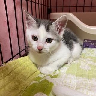 推定 生後2ヶ月の子猫