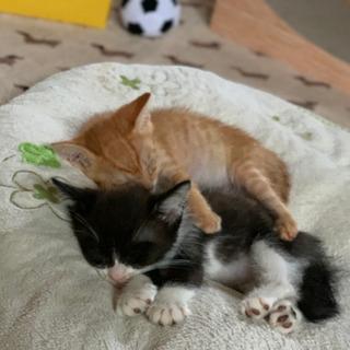 黒白の子猫ちゃん