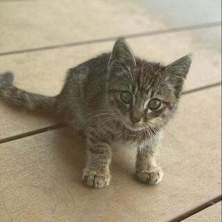 野良の子猫を保護しています。怪我している箇所あり治療中