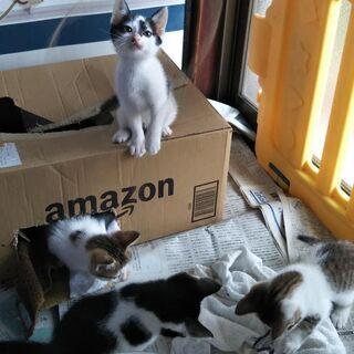 屋根裏生まれ、生後2か月の子猫4匹 -募集終了しますー
