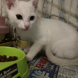 白猫のイケメンくん 3ヶ月程々に