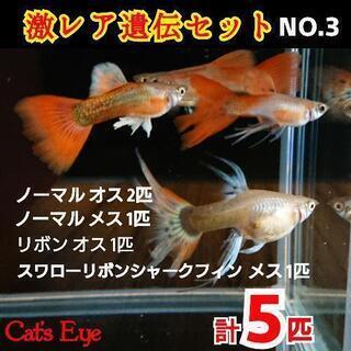 更新:7/13 ノーマルメス(妊婦さん)5匹追加で計10匹❤【C...
