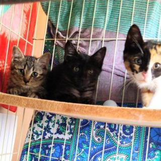 生後2ヶ月位 ワクチン接種済 子猫3匹