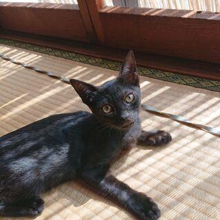 【代理掲載】黒猫の男の子・ジジ