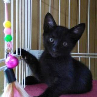 かしこい黒猫の仔猫