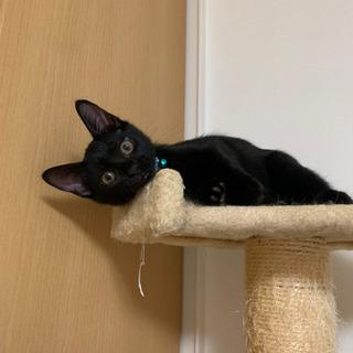 黒猫 3ヶ月 男の子 1匹