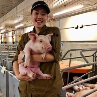 養豚の飼育管理のお仕事