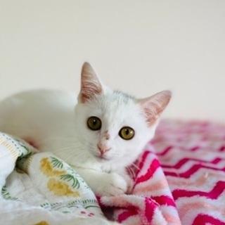 美猫さんです!《7/18の譲渡会に参加します》