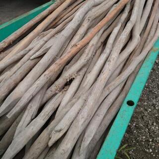 杉の木 丸太①