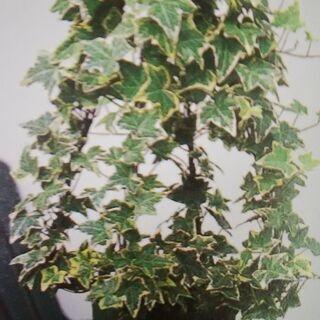 【神奈川・東京・埼玉・千葉・静岡】グリーン&観葉植物処分/引き取...