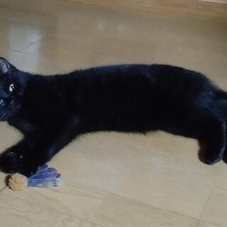 小顔の黒猫