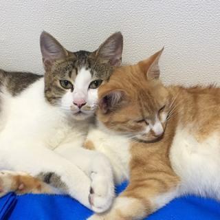 猫2匹(去勢・ワクチン済、見学・触れ合いのみ可)