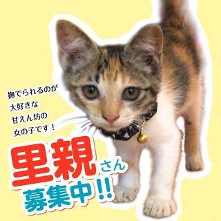 保護した子猫の里親募集中です