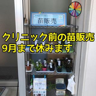 花苗・多肉植物・ハーブ 販売