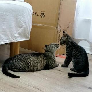 【子猫3匹の家族決まりました!今度は母猫も子離れが落ち着いた頃里...