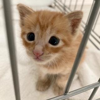 里親募集 生後2〜3週間くらいの子猫