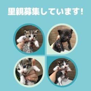 生後1ヶ月の猫ちゃんの家族になってくださる方