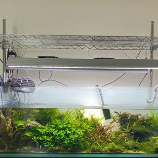 【ネット決済】【アクアリウム大量】水槽・生体・水草・レイアウト用品