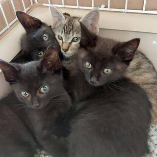 元気いっぱい4兄弟!! 黒猫&トラ猫