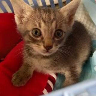 野良猫が5匹仔猫を産み困っています。里親になって下さい。