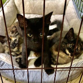 黒猫&サビ猫兄妹