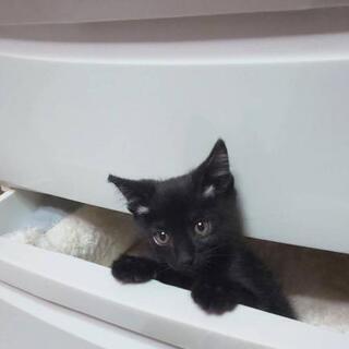 新しい家族決まりました🙇♀️☆仔猫ちゃん 生後約2ヶ月の女の子☆